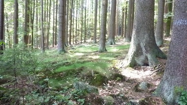 """""""Waldbaden""""…"""